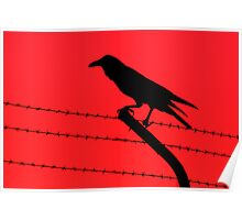 Barbed Wire Crow Poster