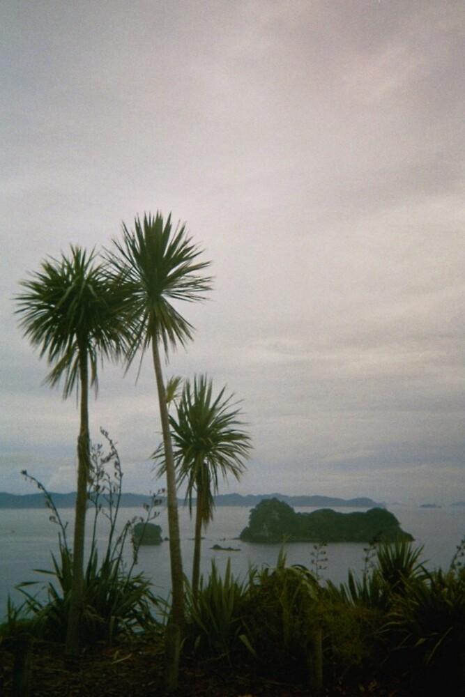New Zealand, Whitianga by martin pearson