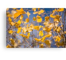 Colors of the Wind Canvas Print