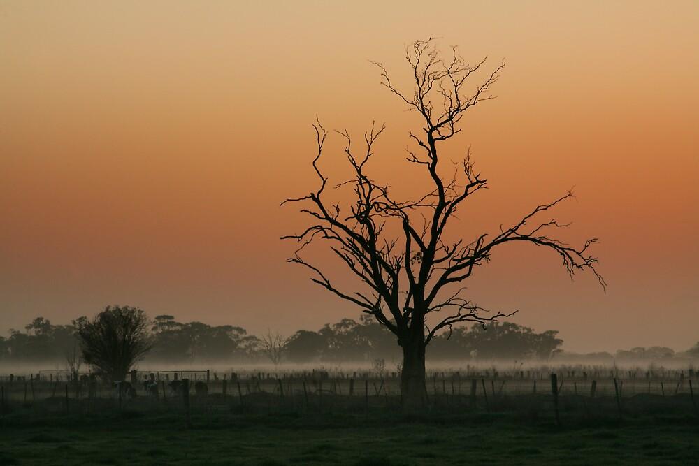Pre Dawn by Thomas Kress