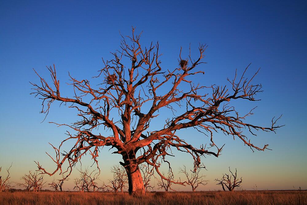 Red Tree by Thomas Kress