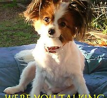 Sparky the wonder dog. by Lynn