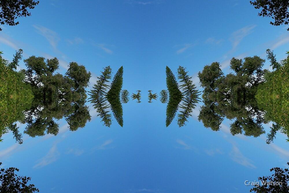 Botanic Kaleidoscope #5 by Craig Watson