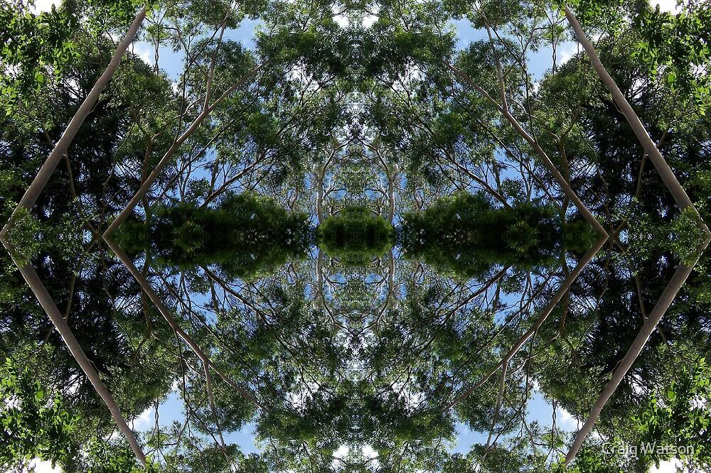 Botanic Kaleidoscope #9 by Craig Watson