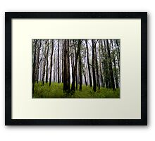 Tall trees in the Mist Framed Print