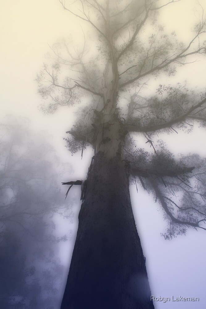 Ghost Tree by Robyn Lakeman