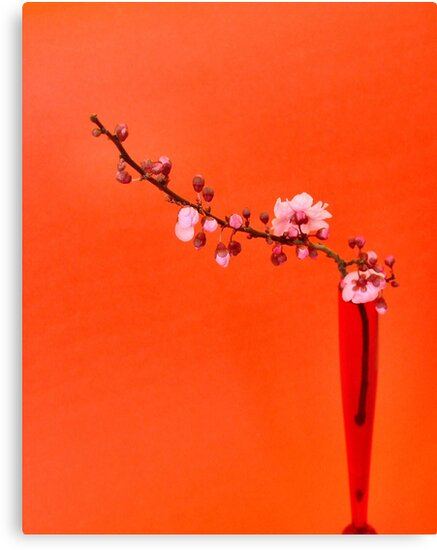 pink blossom I by Janet Leadbeater