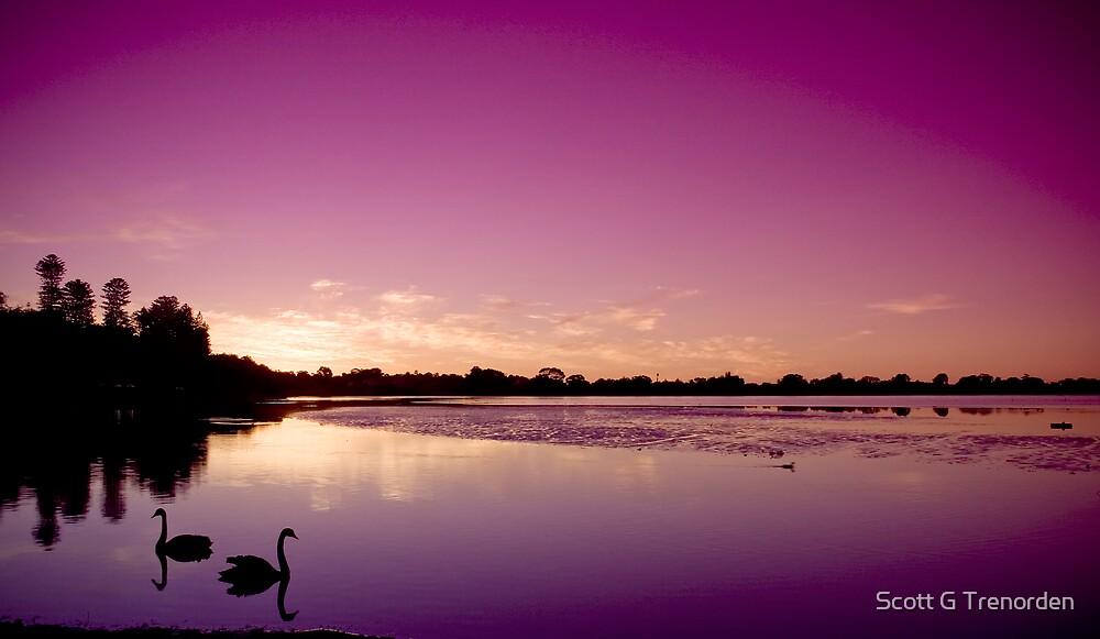 Obliging Swans and Sinking Suns by Scott G Trenorden