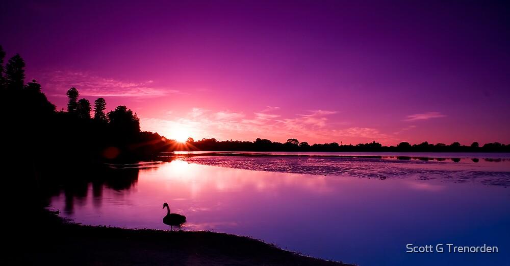 Purple Glory by Scott G Trenorden