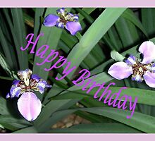Purple Orchids Framed (B/Day Card)  by C J Lewis