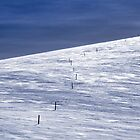 The Alpine Walking Track by John Barratt