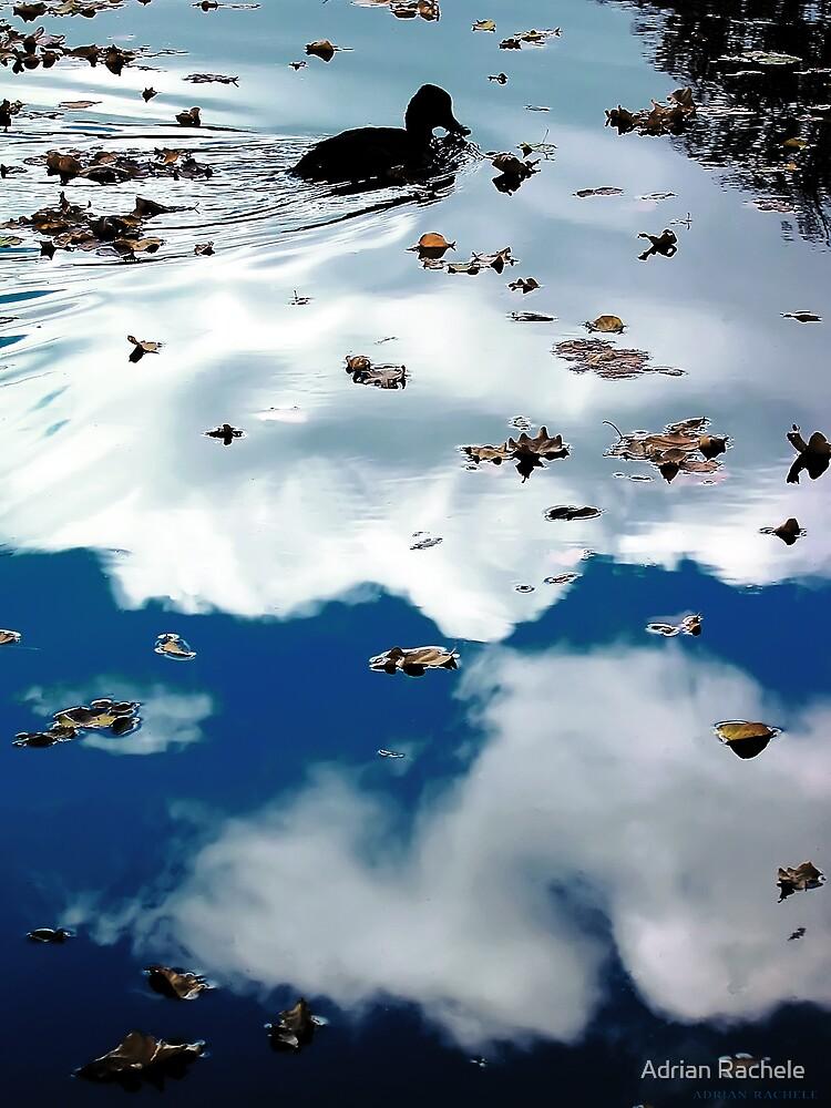 Duck in pond by Adrian Rachele