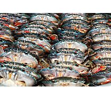 Crabs in a row Photographic Print