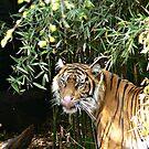Sumatran 'Slurp' by Sandra Chung