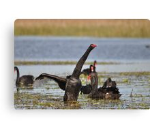Black Swan -  Show of Strength Canvas Print