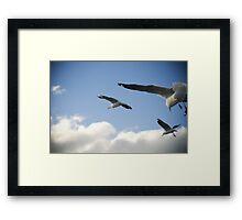 seagull squadron Framed Print