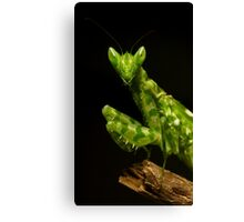 Flower Mantis Beauty Shot Canvas Print