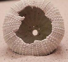 Sea Urchin by Martha Medford