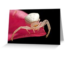 Crab Spider on Frangipani Greeting Card