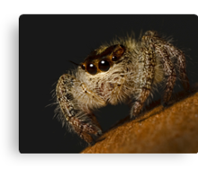 Woolly Predator Canvas Print