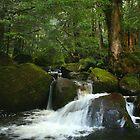 Taggerty River by Michael Eyssens