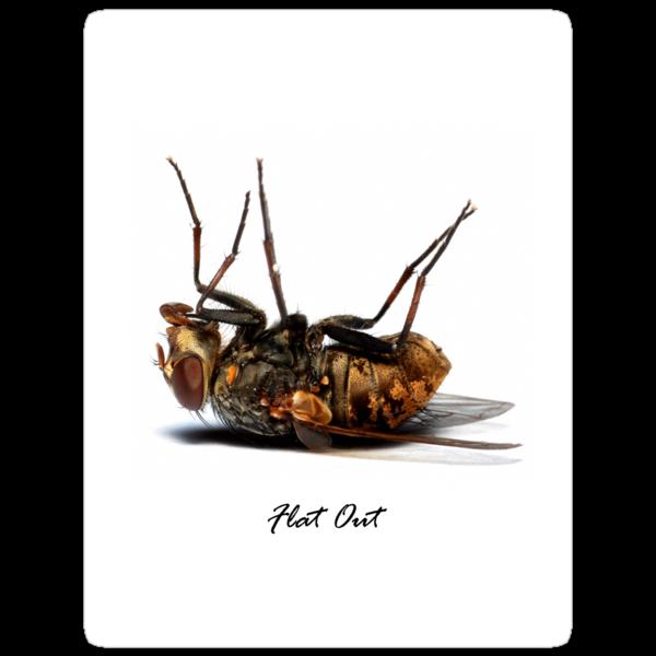 Flat Out by Frank Yuwono
