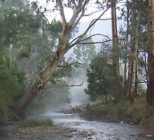 Misty Morning Victorian High Country by Jason Kerr