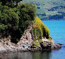 Akaroa Harbour New Zealand by sandysartstudio