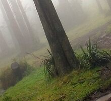 Toolangi Mist by Thomas Kress