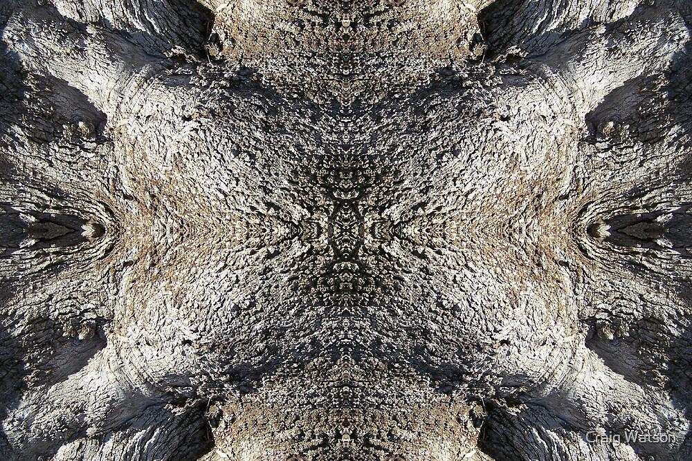 Gnarled Tree Trunk -  Kaleidoscope #4 by Craig Watson