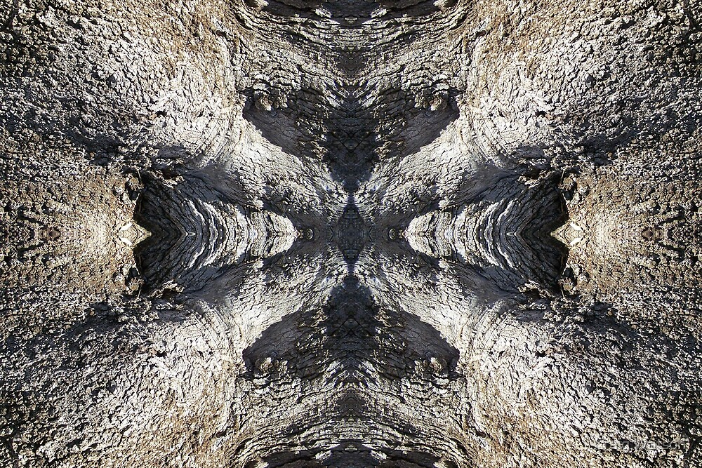Gnarled Tree Trunk -  Kaleidoscope #5 by Craig Watson