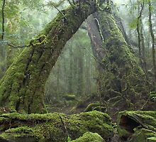Ancient Rainforest by Geoffrey Chang