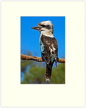 Laughing Kookaburra by Frank Yuwono