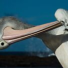 Preening Pelican 2 by Geoffrey Chang
