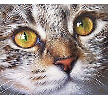 Tabby look Photographic Print