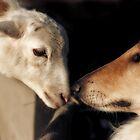 The Sheepdog by Natalie Manuel