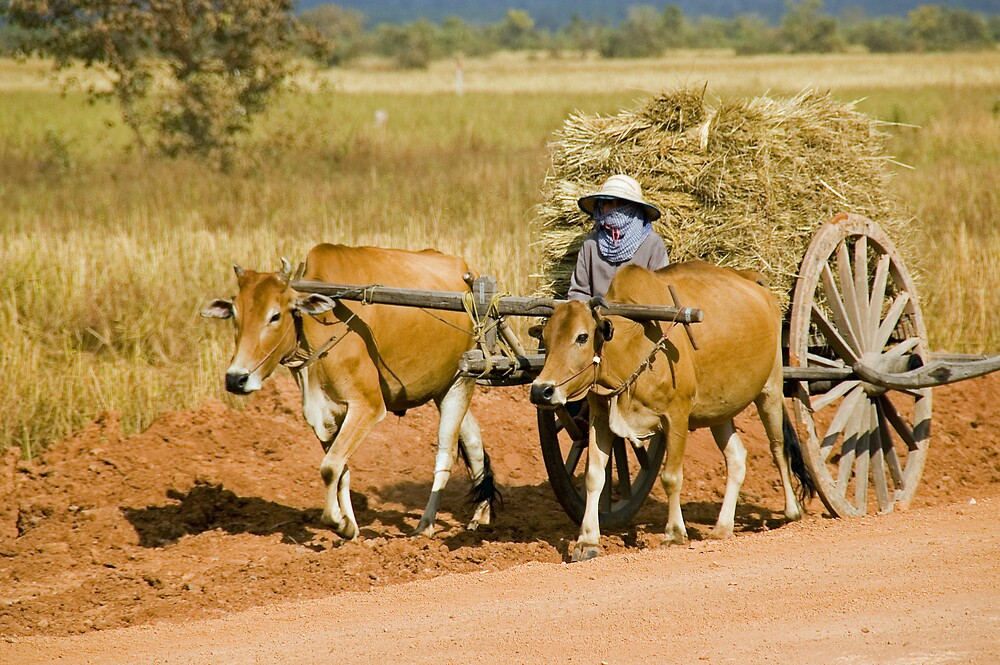 Cambodian Ox Cart by Chris Moysey