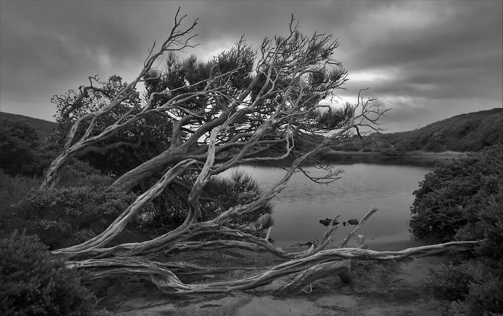Perdition Ponds - B&W by Ian Stewart