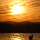 Sunset Lake Macquarie by chriso