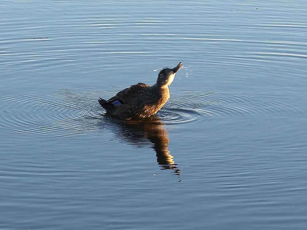 Little duck by Peter Rauch