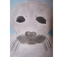 Save The Beautiful Seals Photographic Print