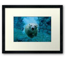 Polar Bear Dive Framed Print