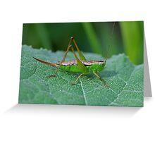 Grasshopper 16 Greeting Card