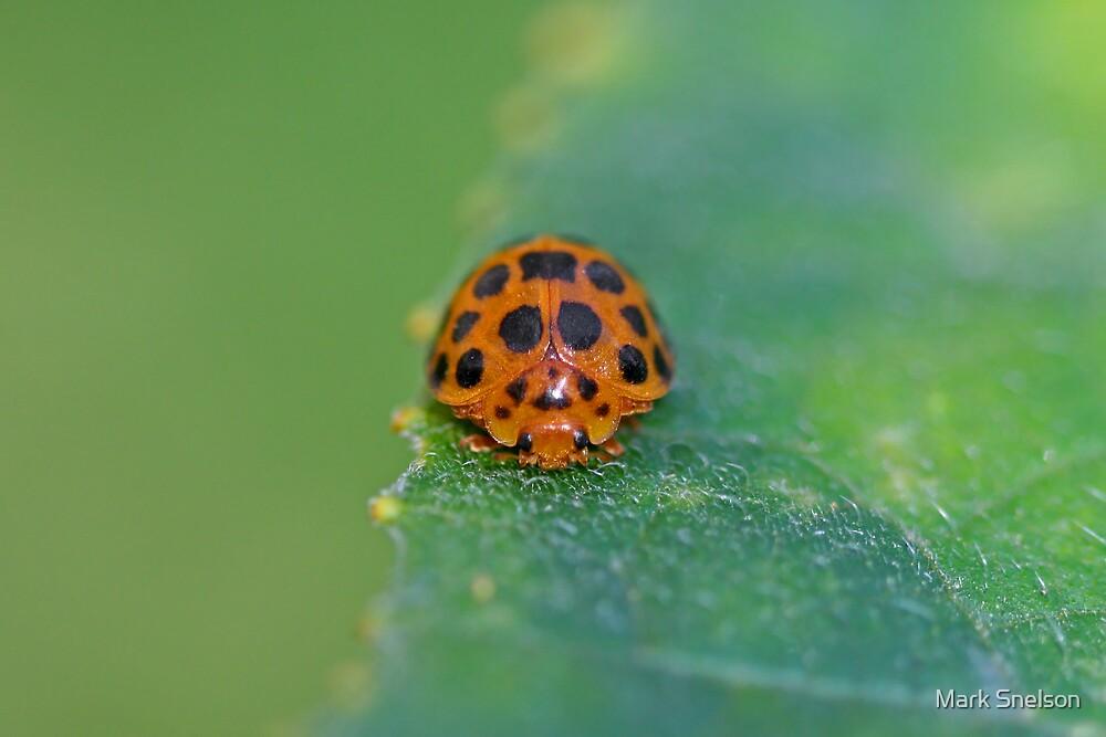 Ladybug 5 by Mark Snelson
