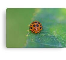 Ladybug 5 Canvas Print