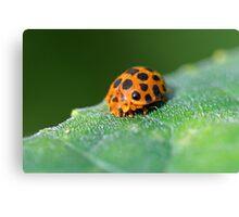 Ladybug 6 Canvas Print