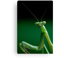 False Garden Mantis Canvas Print