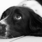 Puppy Eyes by JFPhotography