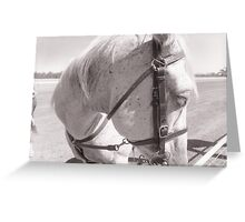 48th Picnic Race Meeting, Warri Racecourse, Ardlethan Greeting Card