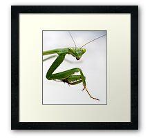 False Garden Mantis 2 Framed Print